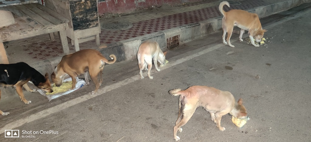 Feed Your Localities Stray Animals